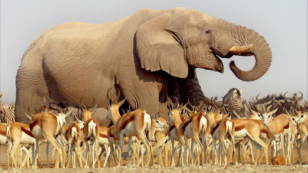 Africa_Elephant