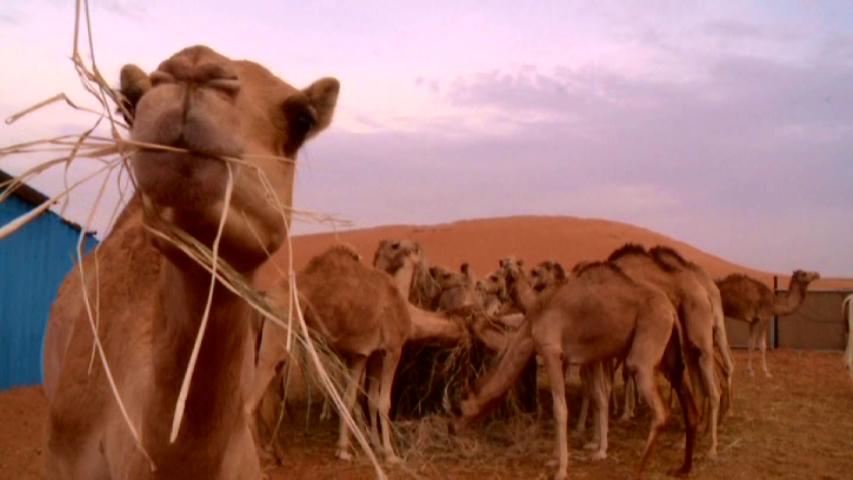 Desert Riders 3