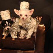 richestdogs