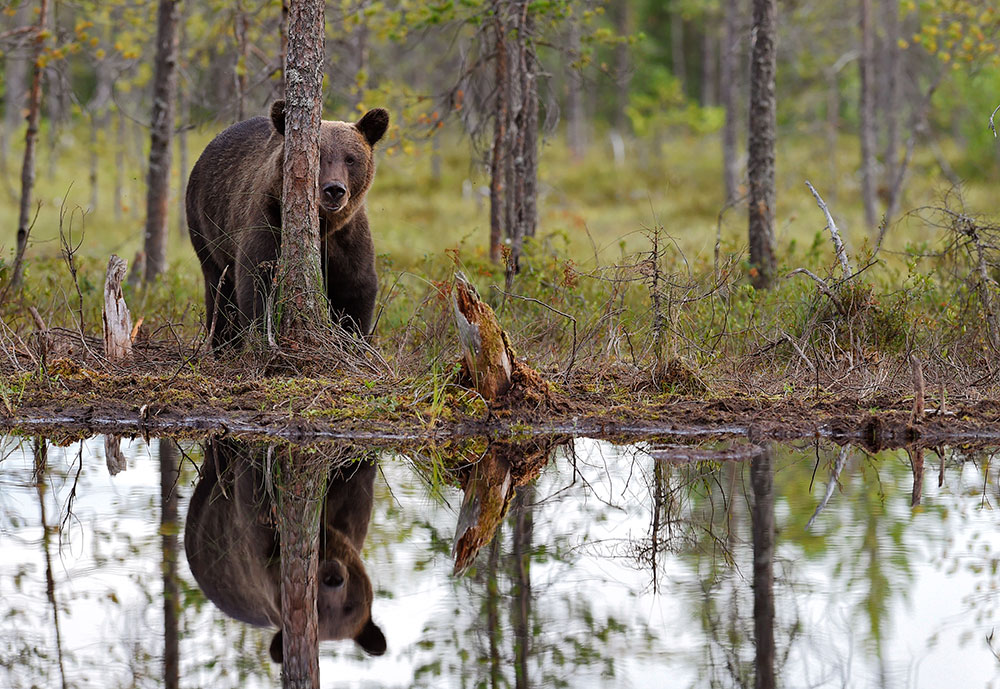 Barcroft-Bear