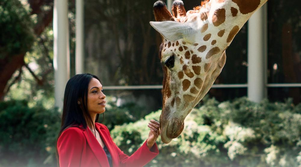 Facebook Watch, HBO series set to debut at TIFF